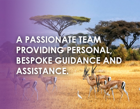 A passionate team providing personal, bespoke guidance and assistance. | De Saude-Darbandi Attorneys